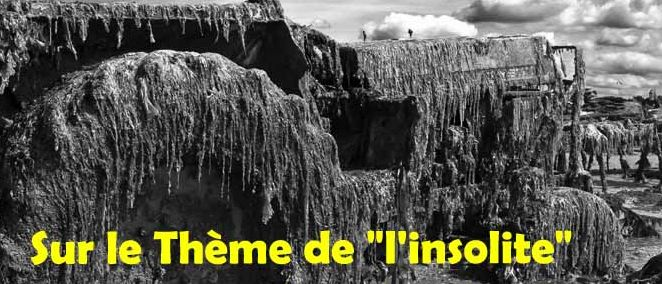 'Insolite' est le thème de l'apéro-poétique du 14 décembre